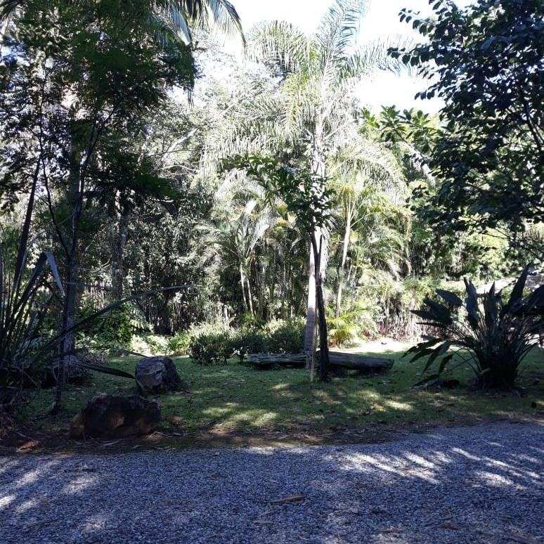 Ambiente repleto de árvores e natureza.