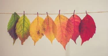 Folhas secas penduradas em um varal em diferentes estágios.
