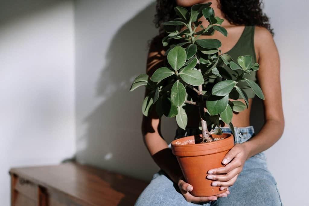 Mulher segurando vaso com planta