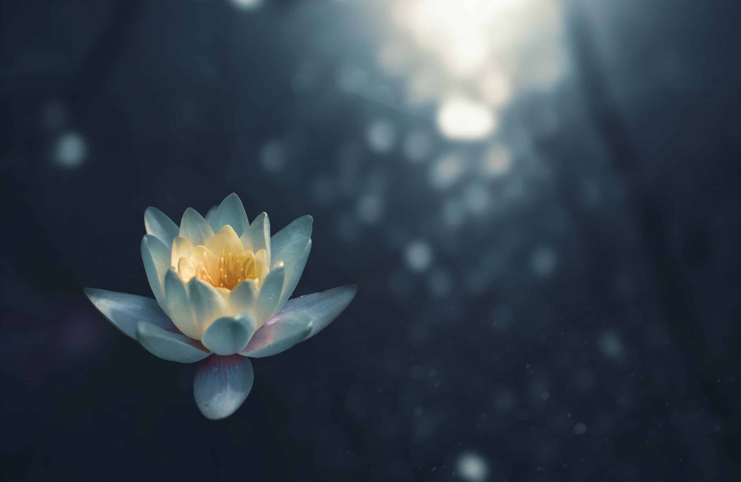 Flor flutuando em meio a natureza e à luz do dia.