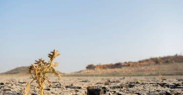 Campo de terra seca, com uma pequena planta morrendo, seca, sem água.
