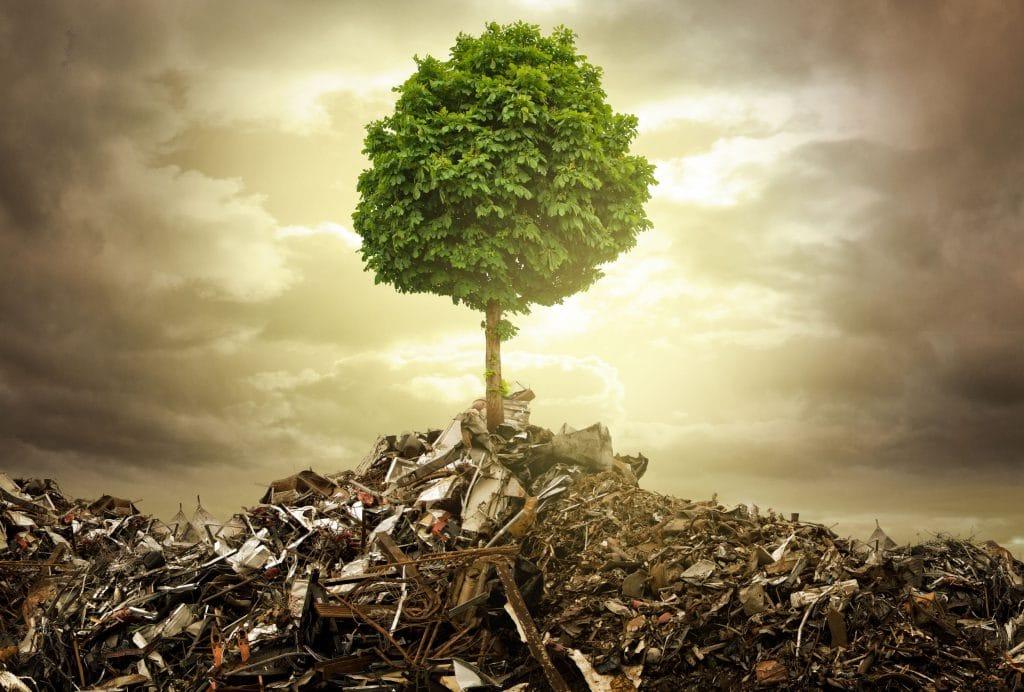 árvore no lixo