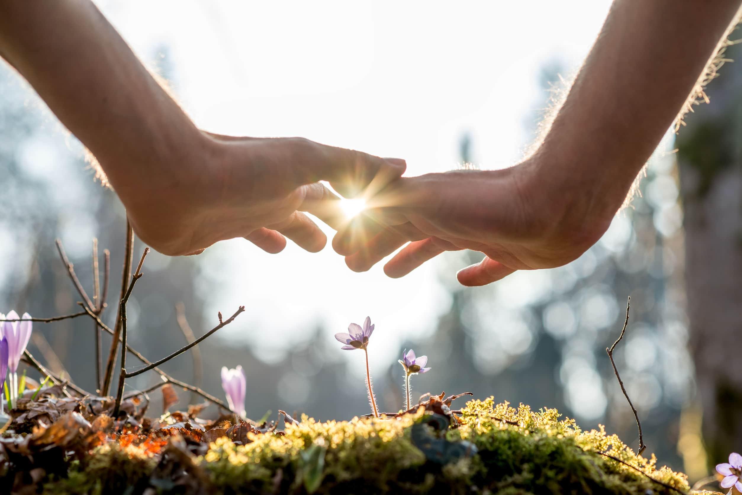 Mãos humanas protegendo pequenas flores do sol.