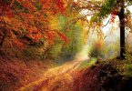 Foto de floresta durante o outono