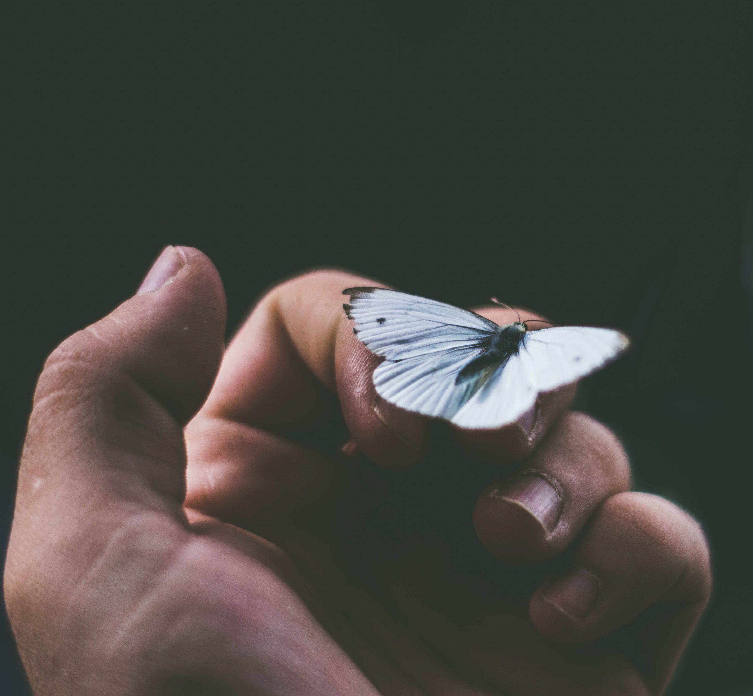 Mão fechada com borboleta entre os dedos.