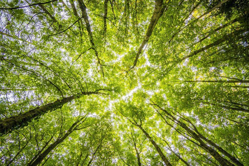 Árvores vistas de baixo com céu ao fundo