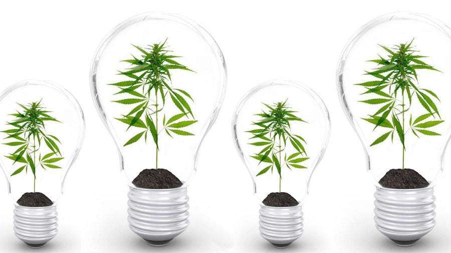 Ilustração de lâmpadas com plantas dentro.