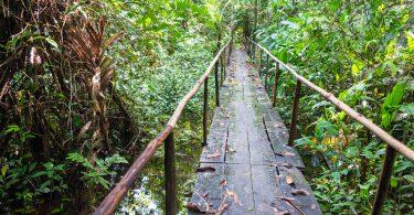 Ponte de madeira em meio à floresta amazônica.