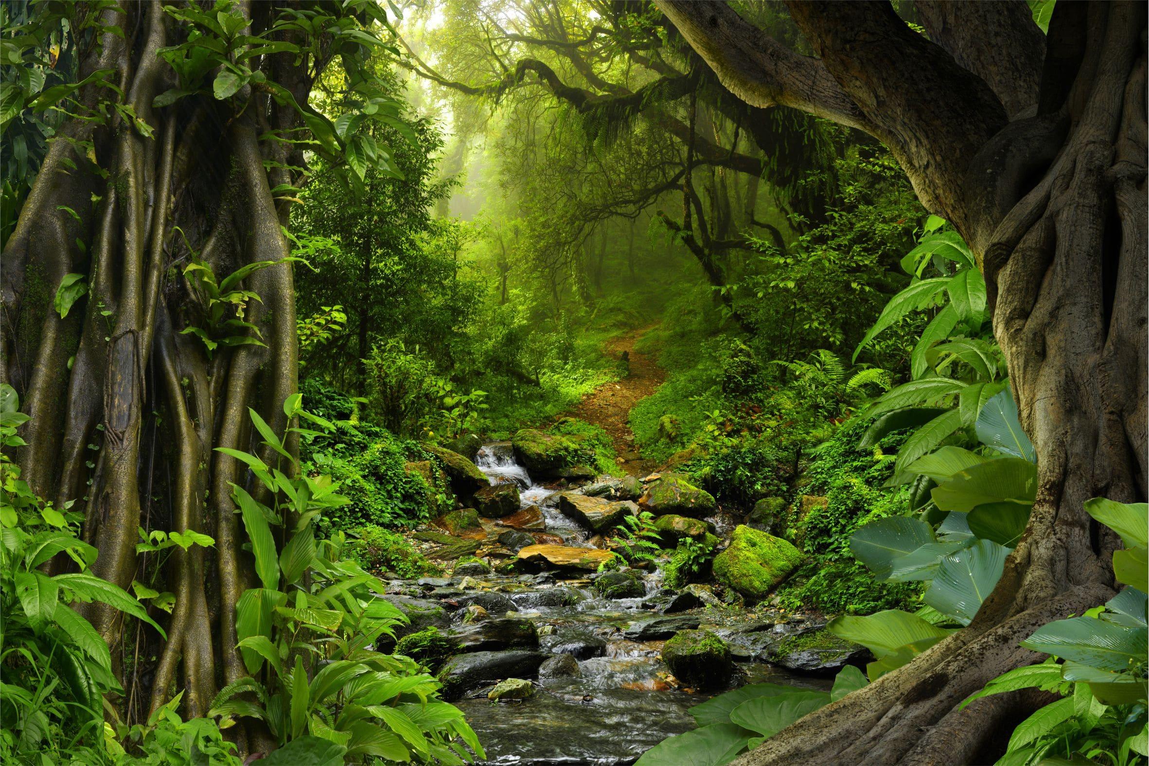 Riacho em floresta Amazônica.