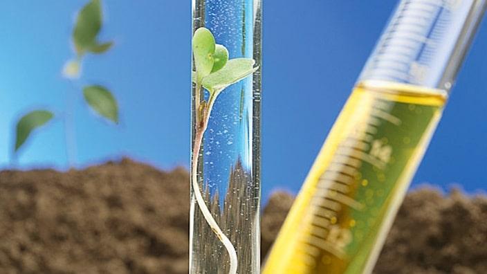 Planta produtora de bioenergia.