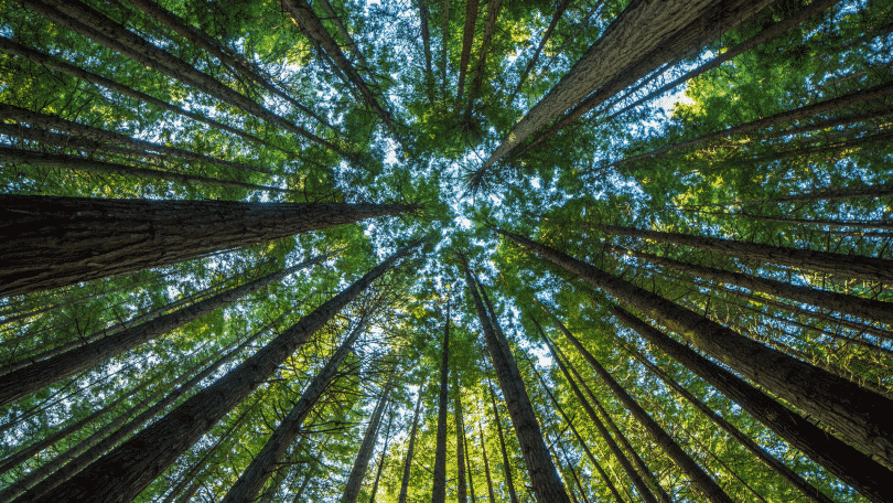 Copa das árvores na floresta