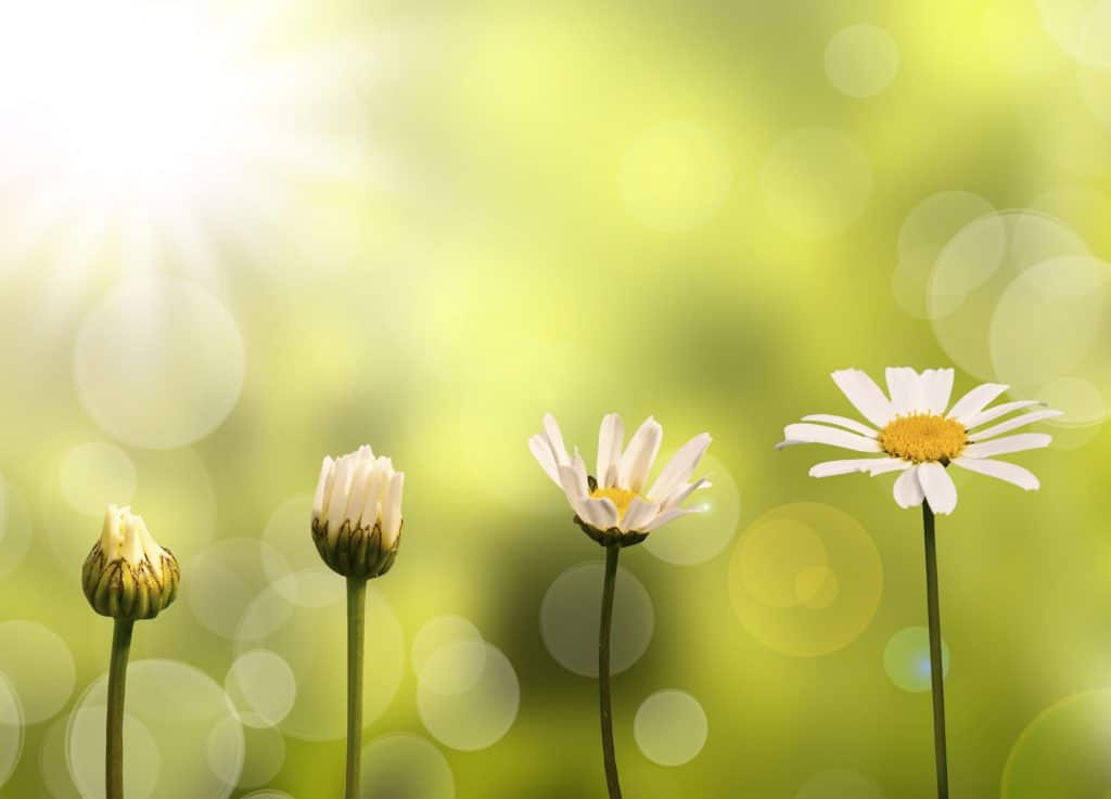 transformação da primavera