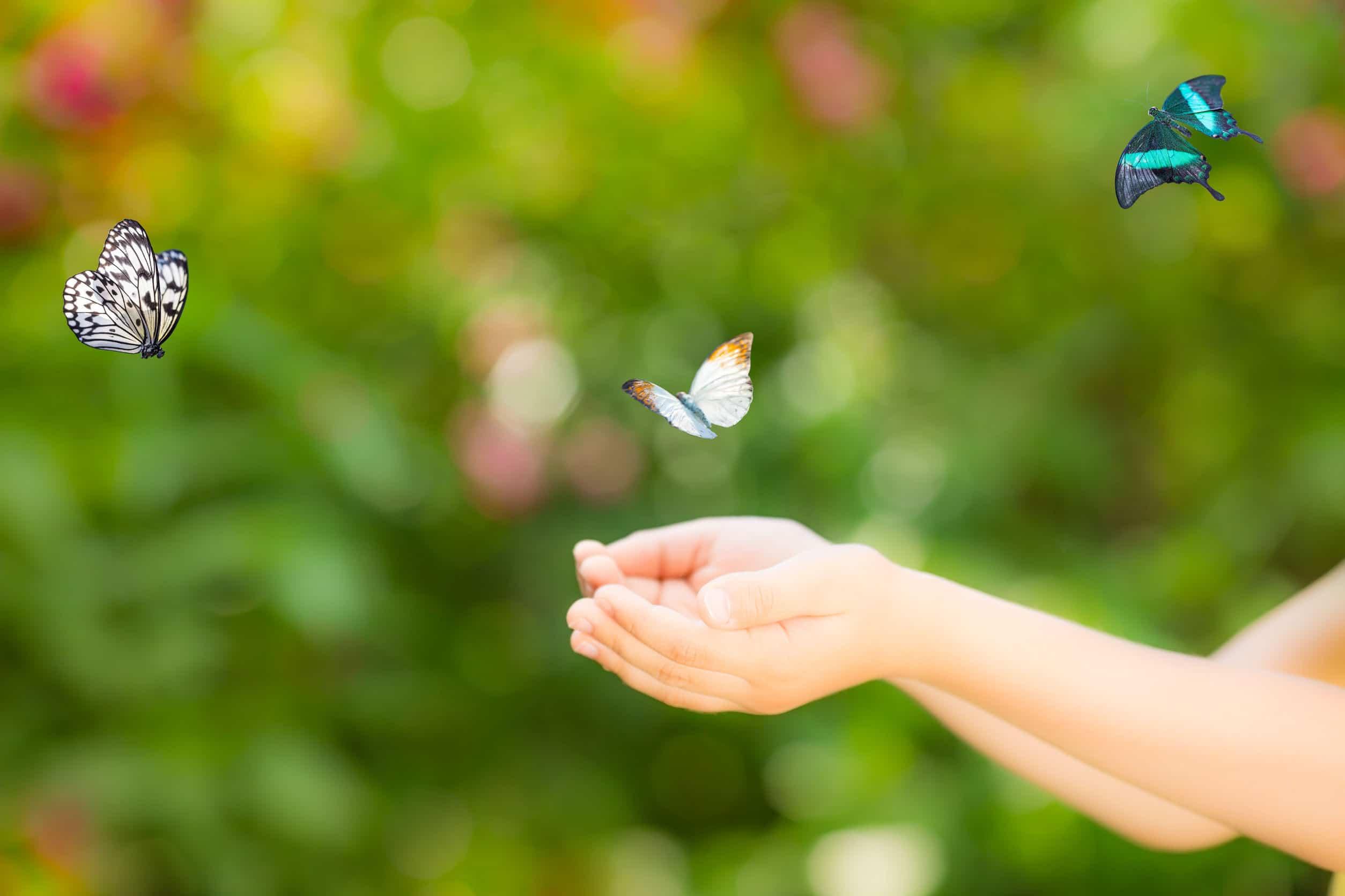 Mão de uma criança estendida enquanto três borboletas voam acima.