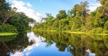 Floresta amazônica perfeitamente refletida em uma parte do rio.