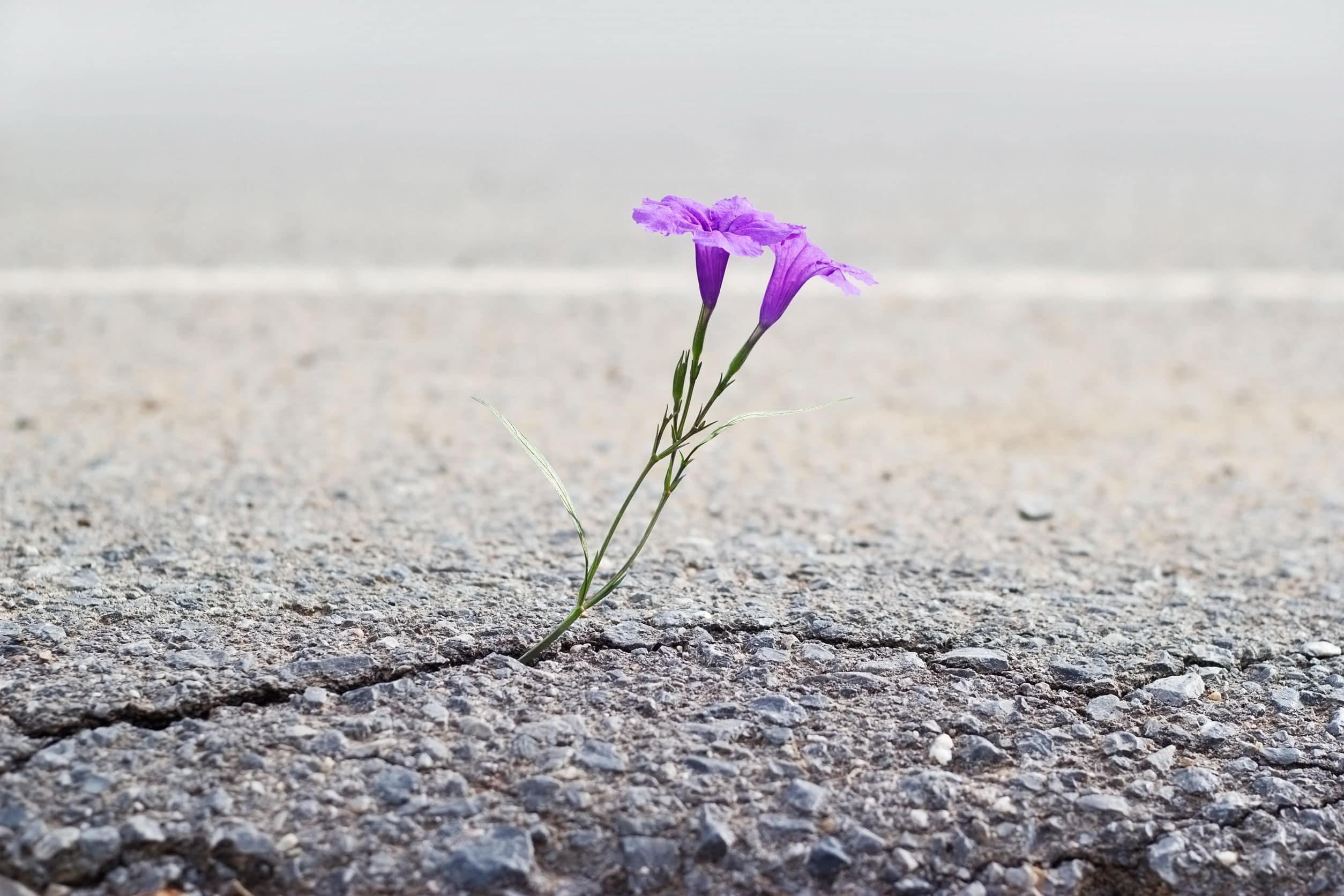 Planta nascendo do chão afastado.