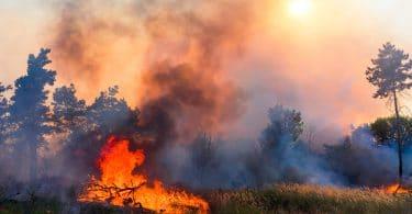 Queimada com árvore no chão queimando