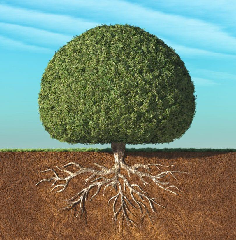 Uma árvore perfeita com folhas verdes em forma de esfera com raízes subterrâneas.