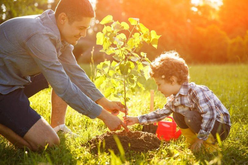 Menino e homem plantando uma muda de árvore em um campo gramado verde.