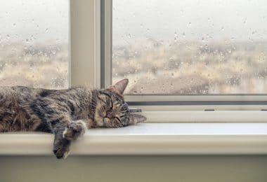 Gato bonito dormindo no peitoril da janela em um dia chuvoso