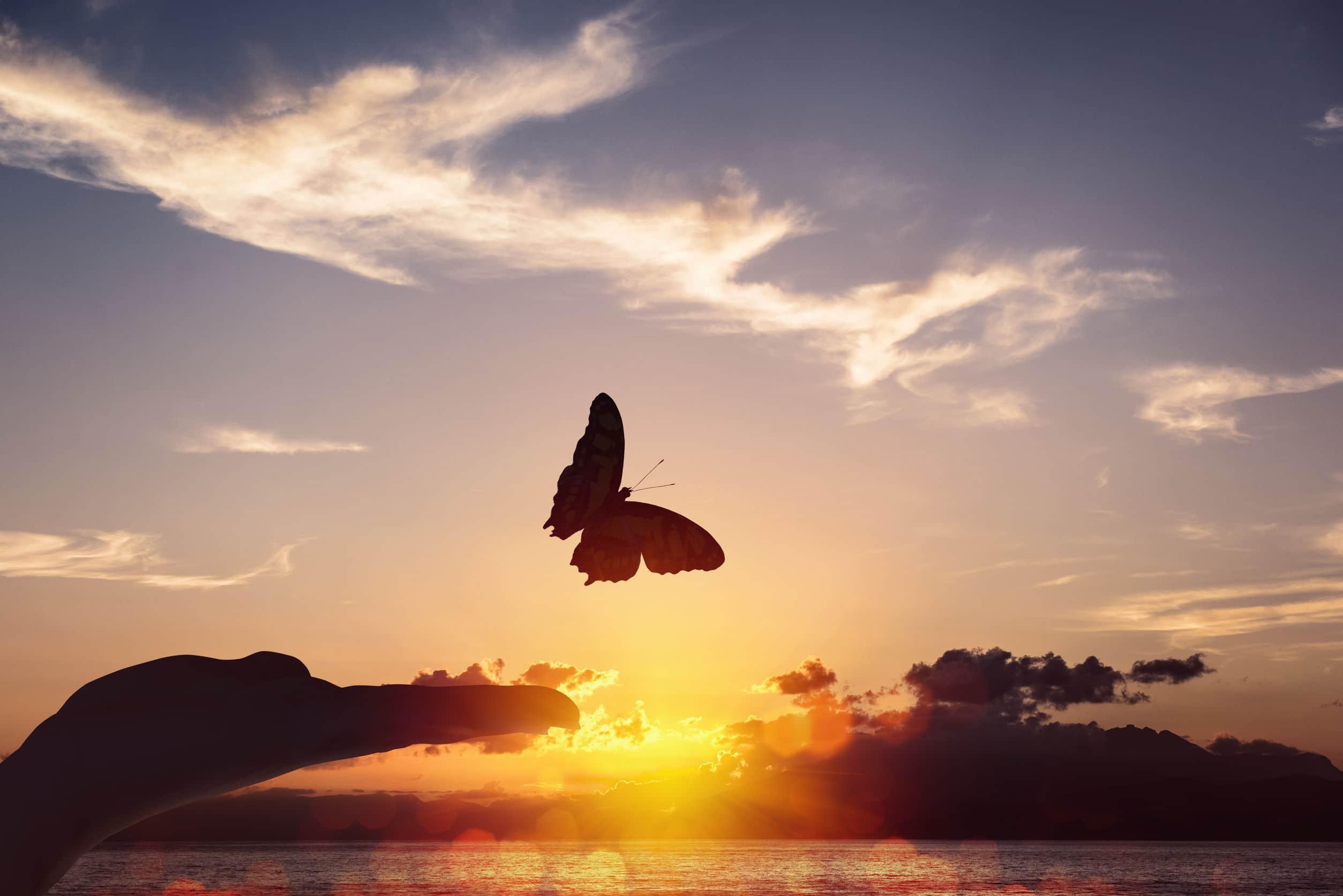 Borboleta voando no ceú com pôr do sol laranja.