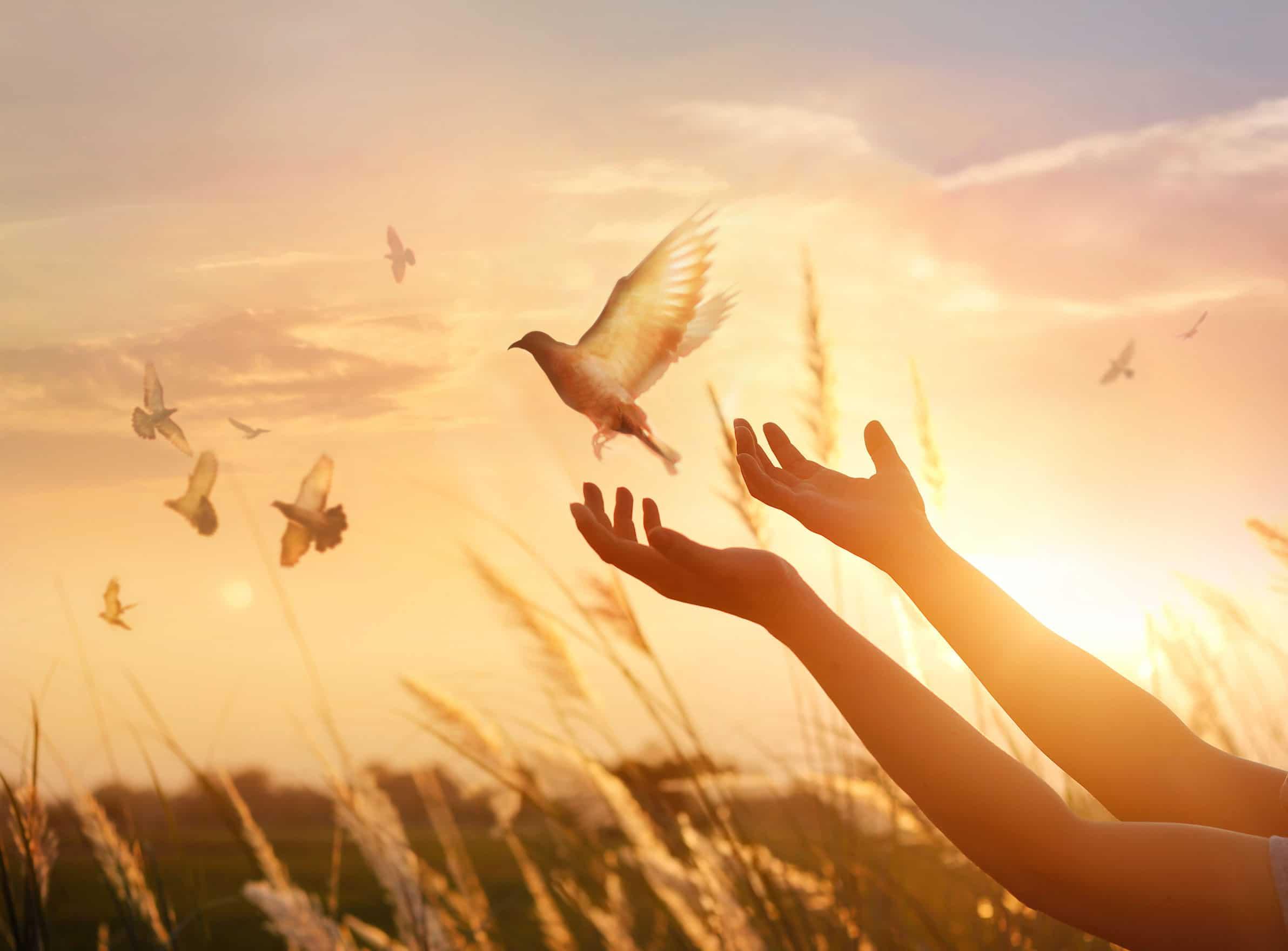 Mãos humanas libertando uma pomba na natureza.