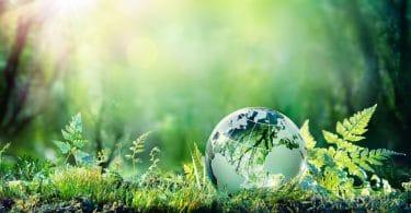 Globo da terra em vidro que reflete todo cenário de natureza ao redor.