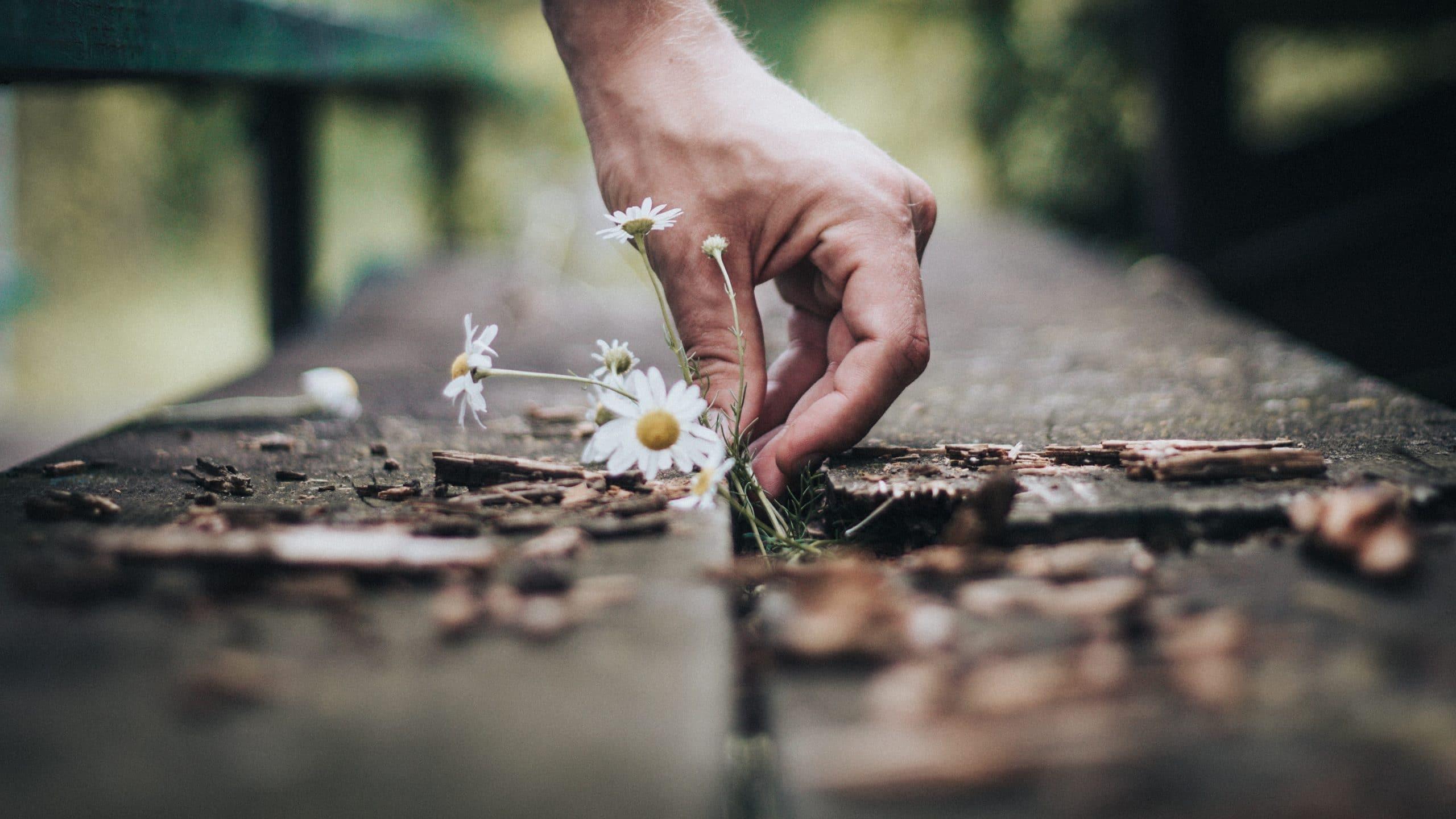 Mão masculina segurando flores.