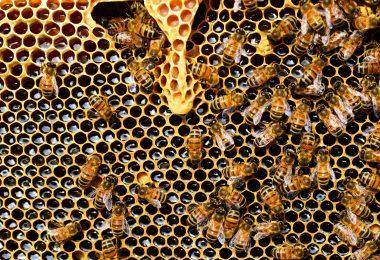 Colmeia de abelhas