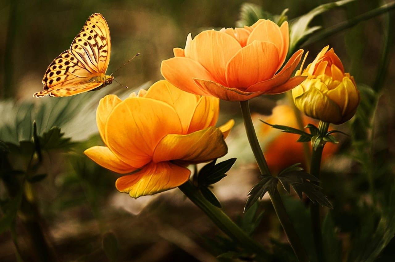 Flores amarelas com borboleta pousando