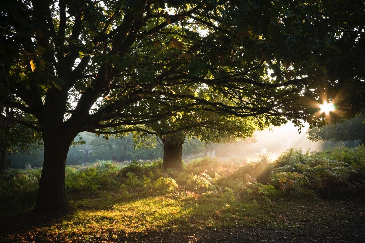 Campo com árvores e sol reluzindo