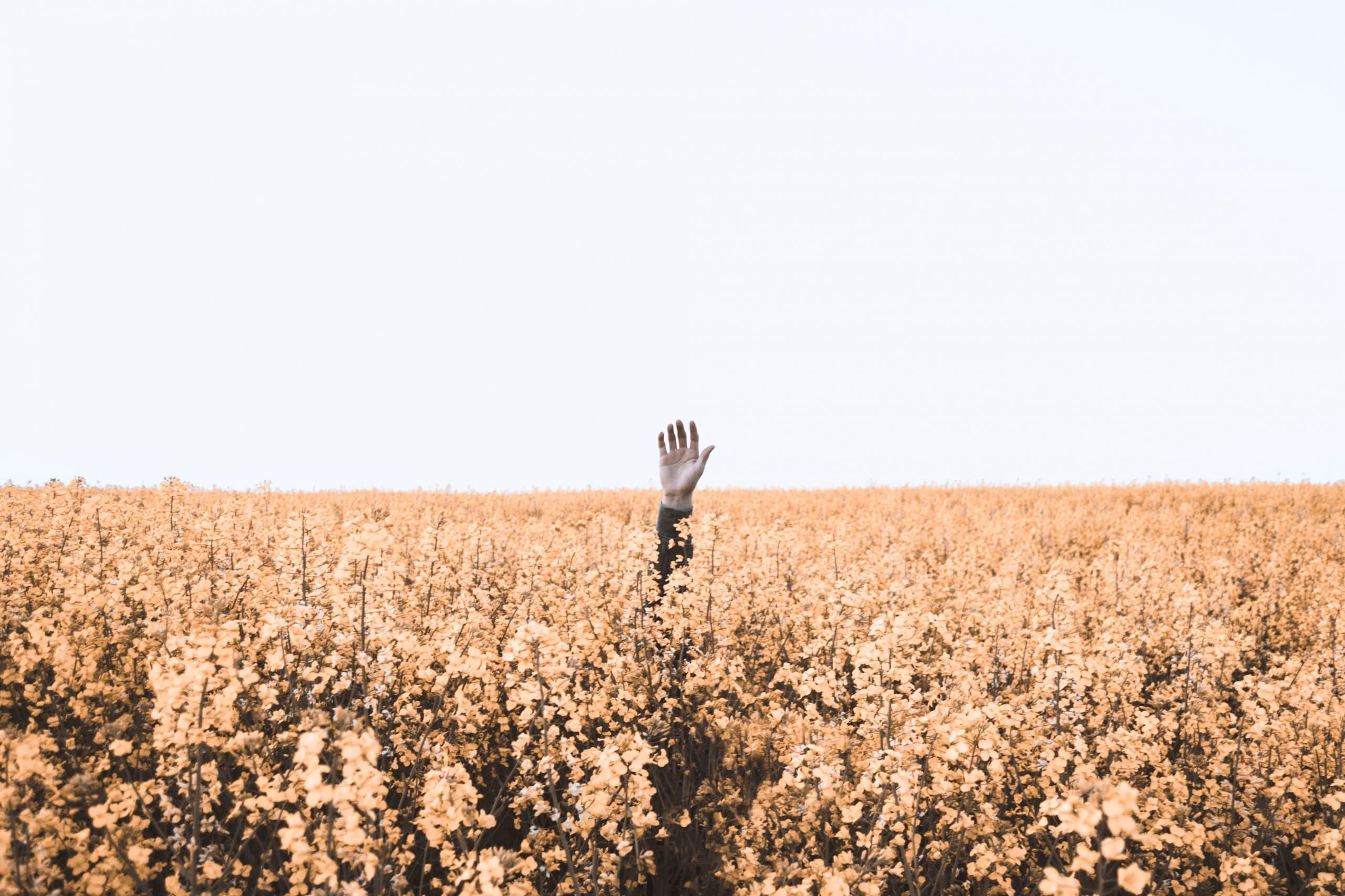 Mão saindo de campo de flores amarelas