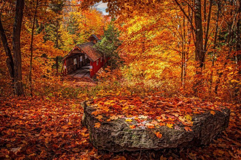 Bosque de folhas alaranjadas.