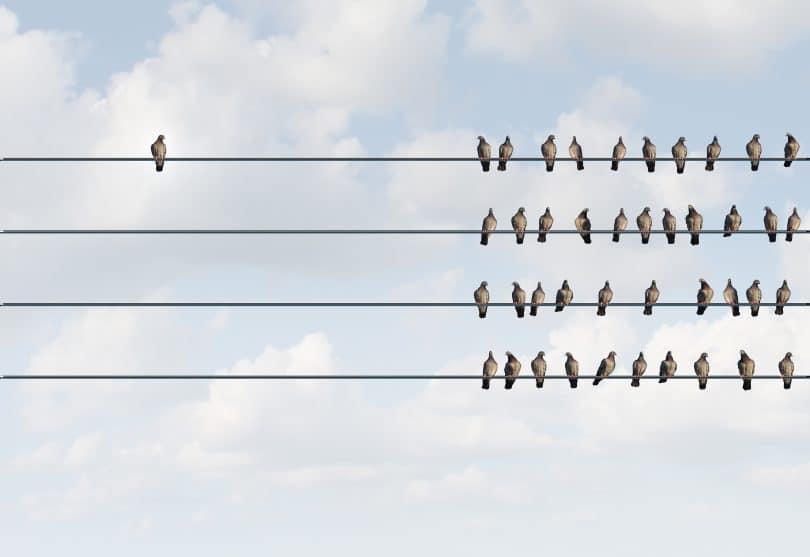 Pássaro sozinho à esquerda afastado dos demais pássaros amontoados em fios condutores de energia elétrica.