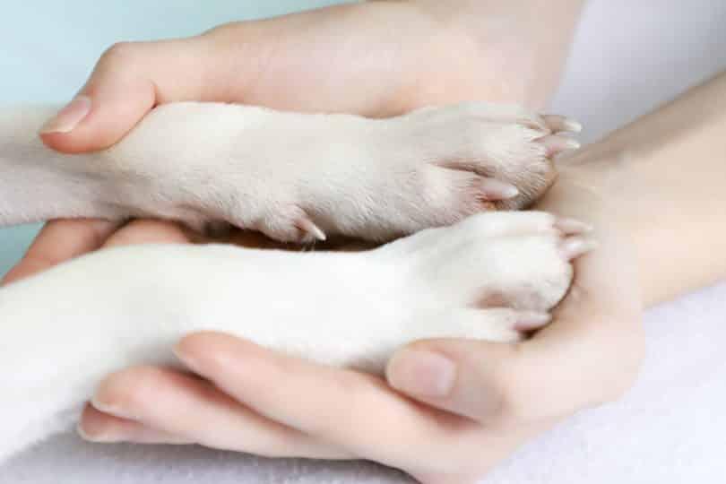 Patas de cachorro sobre mãos humanas.