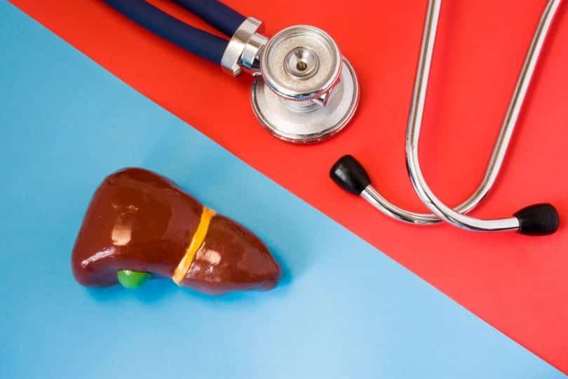 Projeto de fígado e estetoscópio numa mesa.