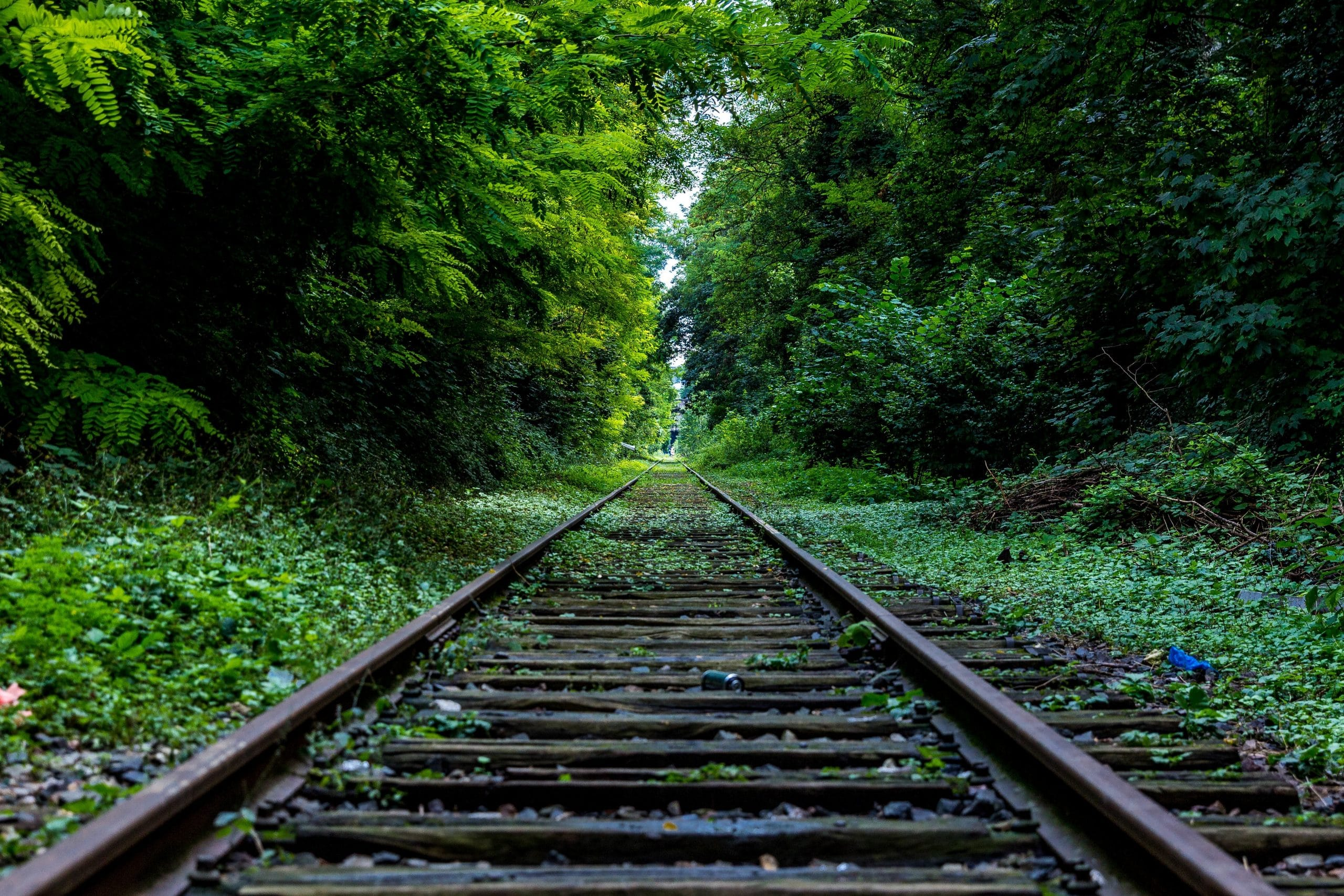 Trilho de trem no meio do mato