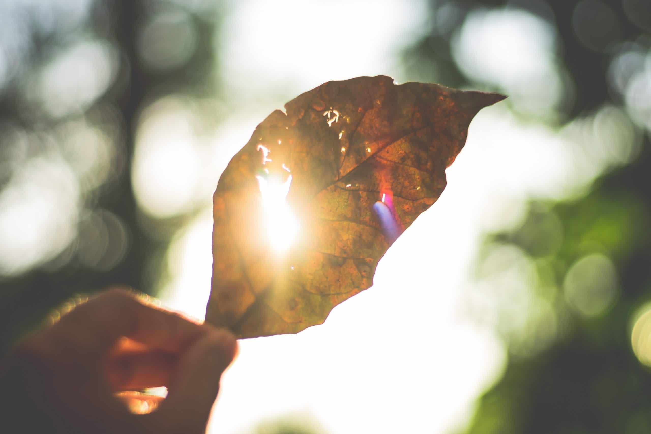 Mão segurando folha sob o sol
