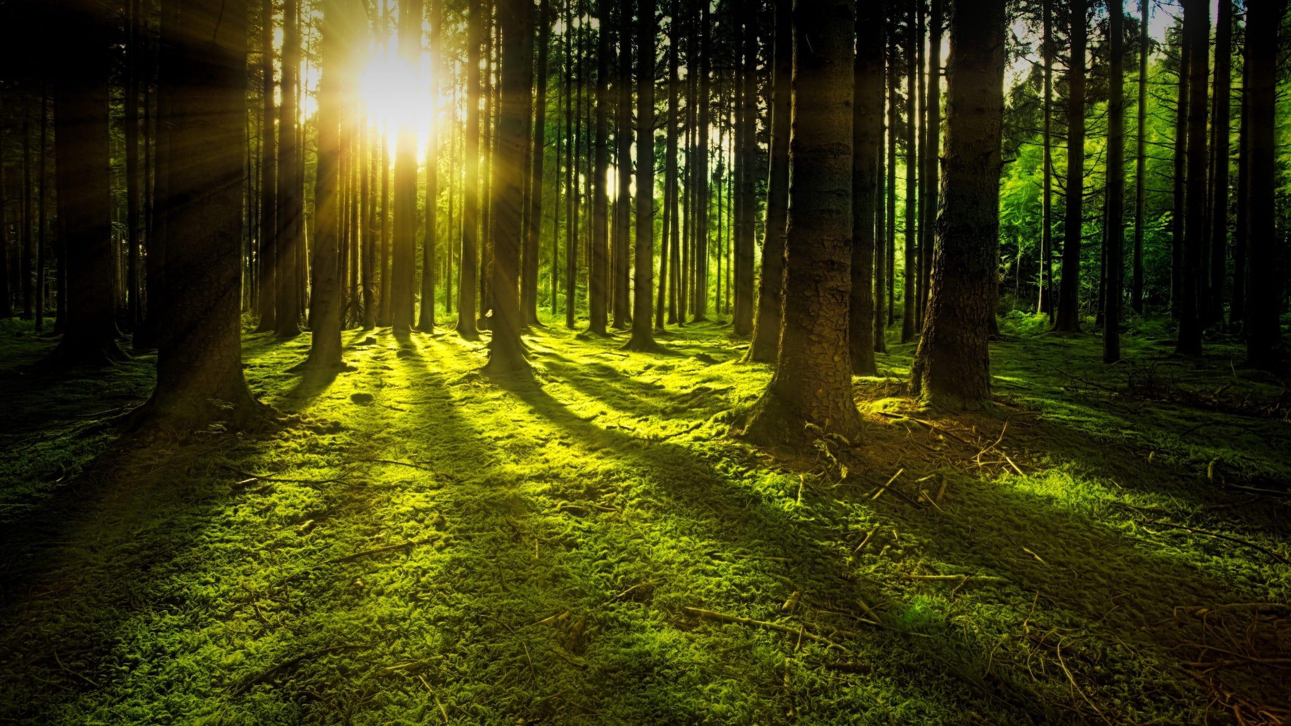 Árvores com sol reluzindo
