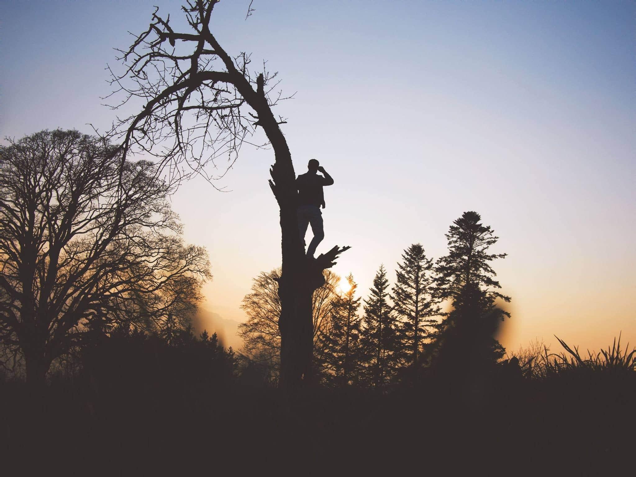 Silhueta de homem em cima de árvore e pôr-do-sol