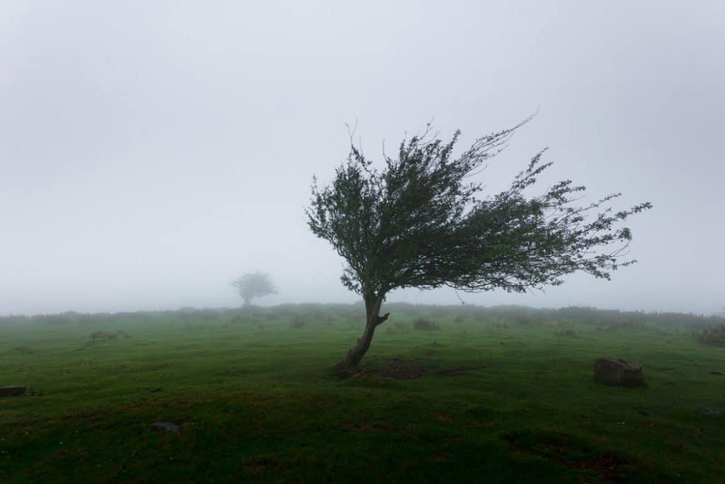 Ventando na árvore
