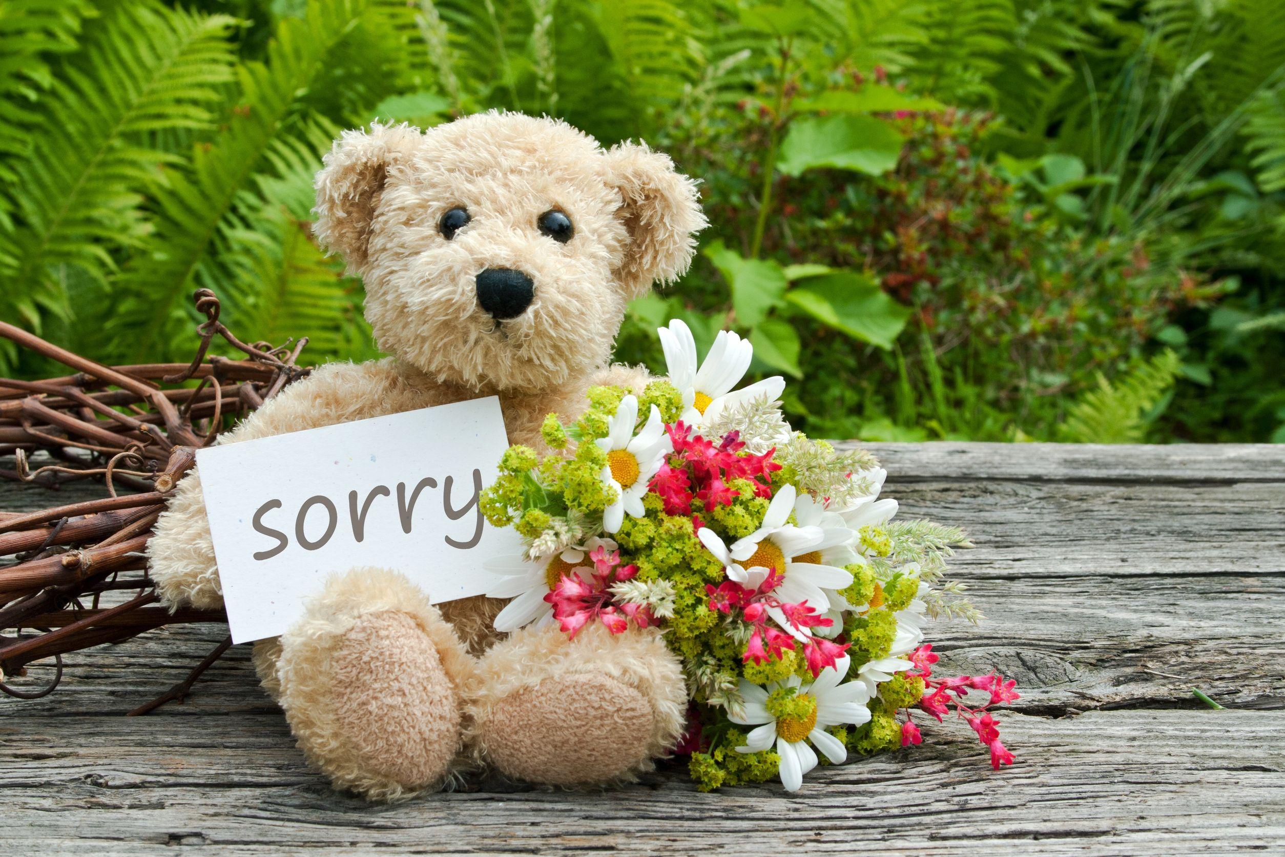 """Ursinho com placa de """"sorry""""."""