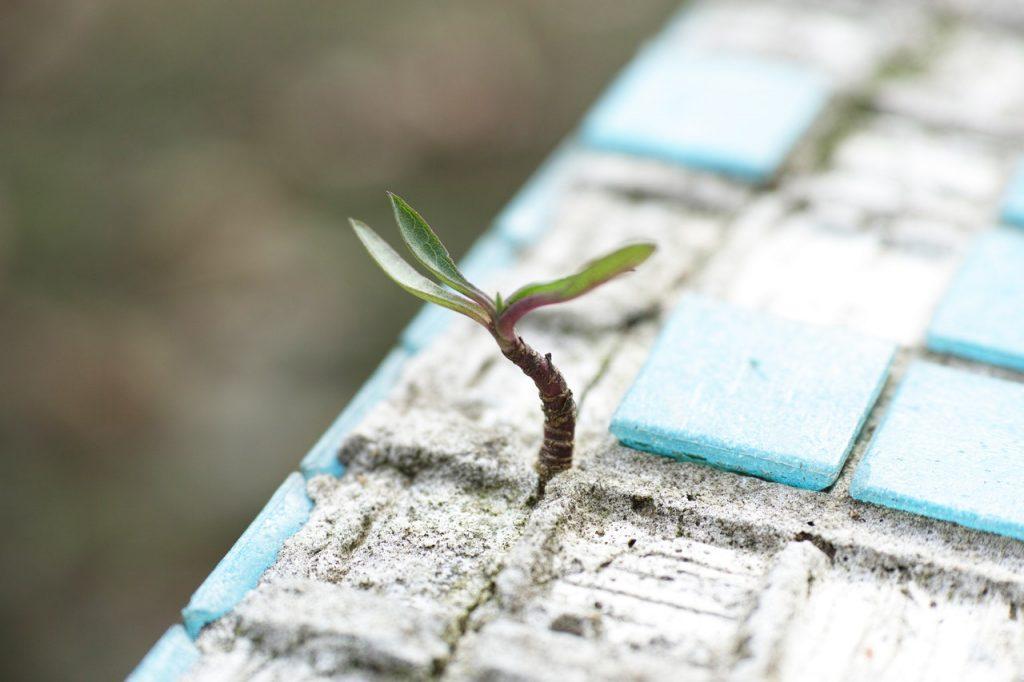 Planta brotando no meio de pequenos azulejos