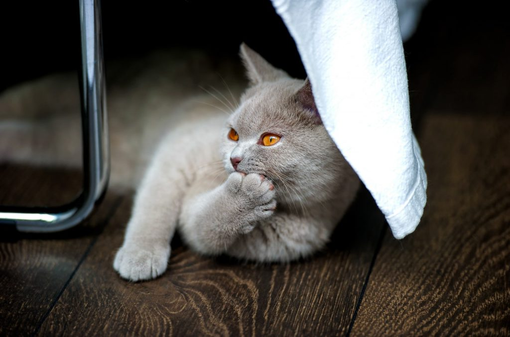Gato cinza de olhos alaranjados deitado no chão com uma pata segurando a cabeça.