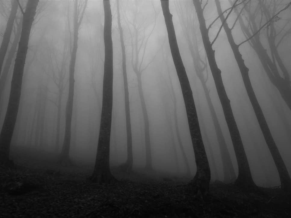 Floresta com neblina