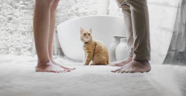 Casal em pé com gato de cor caramelo sentado entre os dois, olhando para cima.