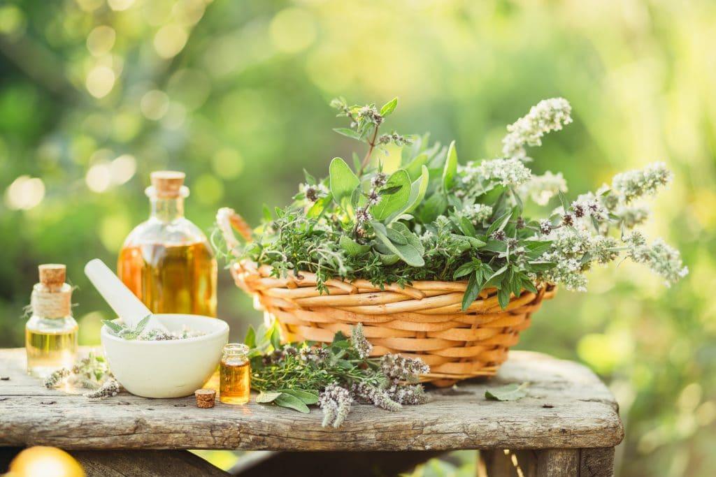 Ervas naturais dentro de um cesto de vime que serão utilizadas para a produção de remédio caseiro para a gordura no fígado. Ao lado da cesta um vidro de óleo e essência para complementarem os ingredientes.
