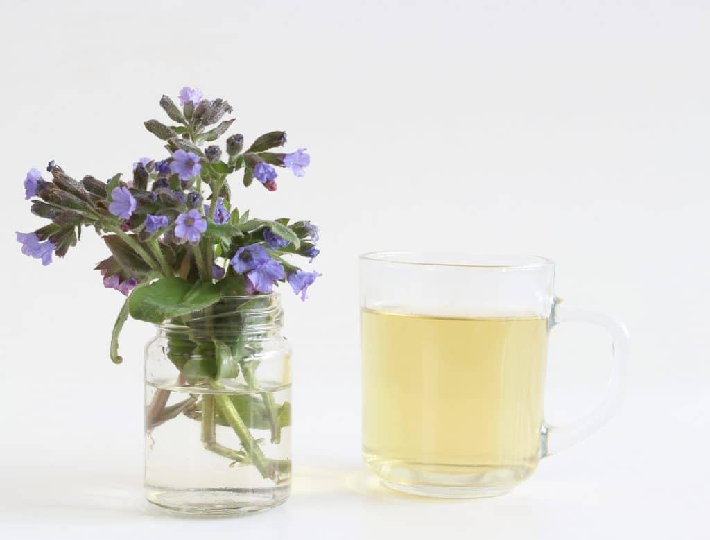 Chá de pulmonária servido em uma xícara de vidro. Ao lado da xícara um vaso com a flor da pulmonaria.