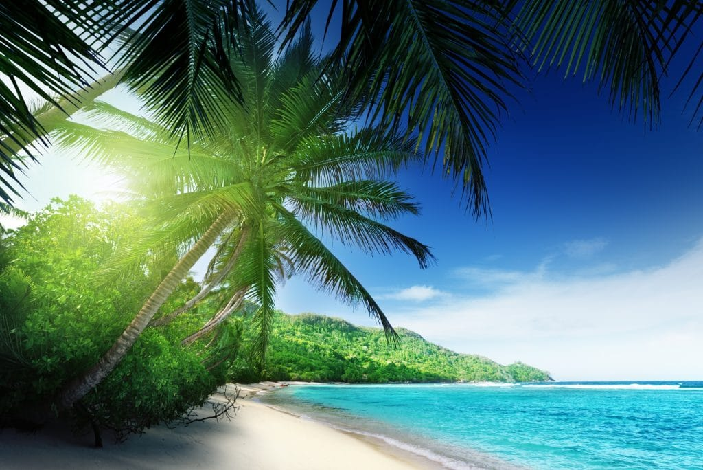 Imagem de uma praia com água bem azul. A praia está vazia. Tem um coqueiro e uma mata ao seu entorno.