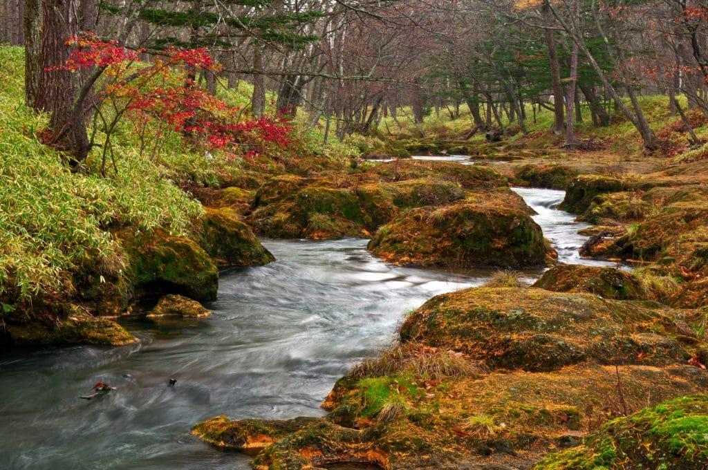 Imagem de um rio límpido. Ao lado dele várias árvores e pedras.