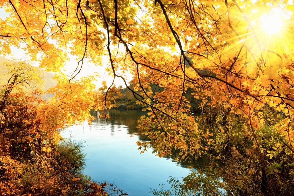 Imagem de um rio. Nas laterais várias folhagens. Ao fundo raios de sol iluminam a paisagem.
